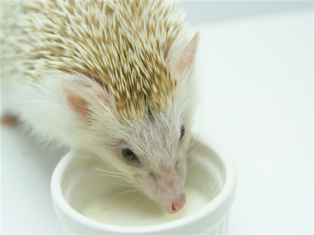 ミルク好きになったソフィ